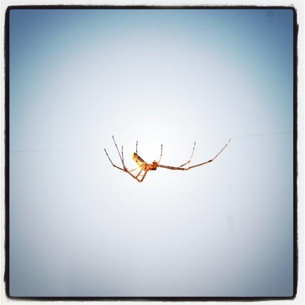Eine Spinne hamgelt sich an einem dünnen Faden entlang