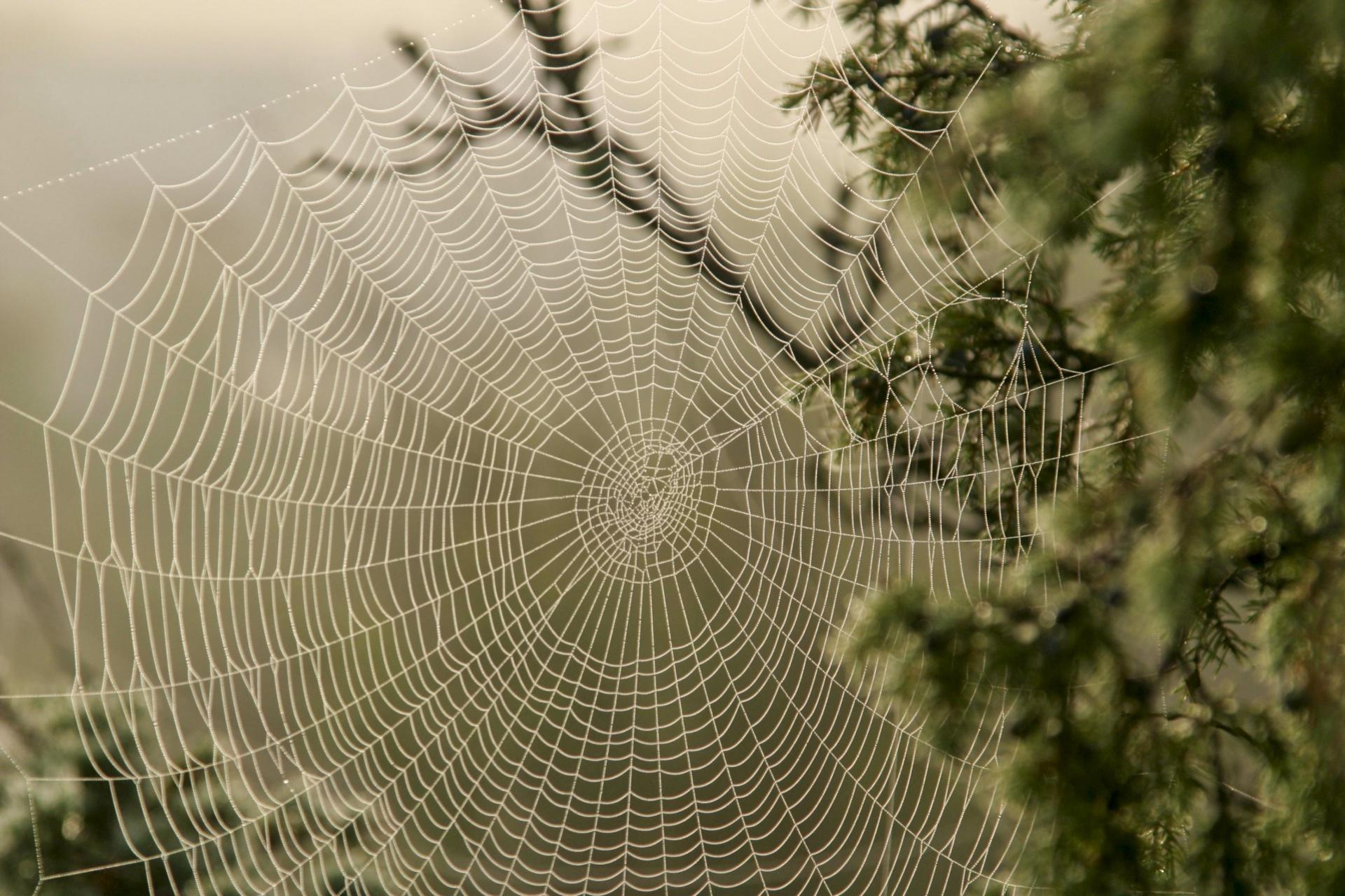 Spinnweben im Spätsommerlicht