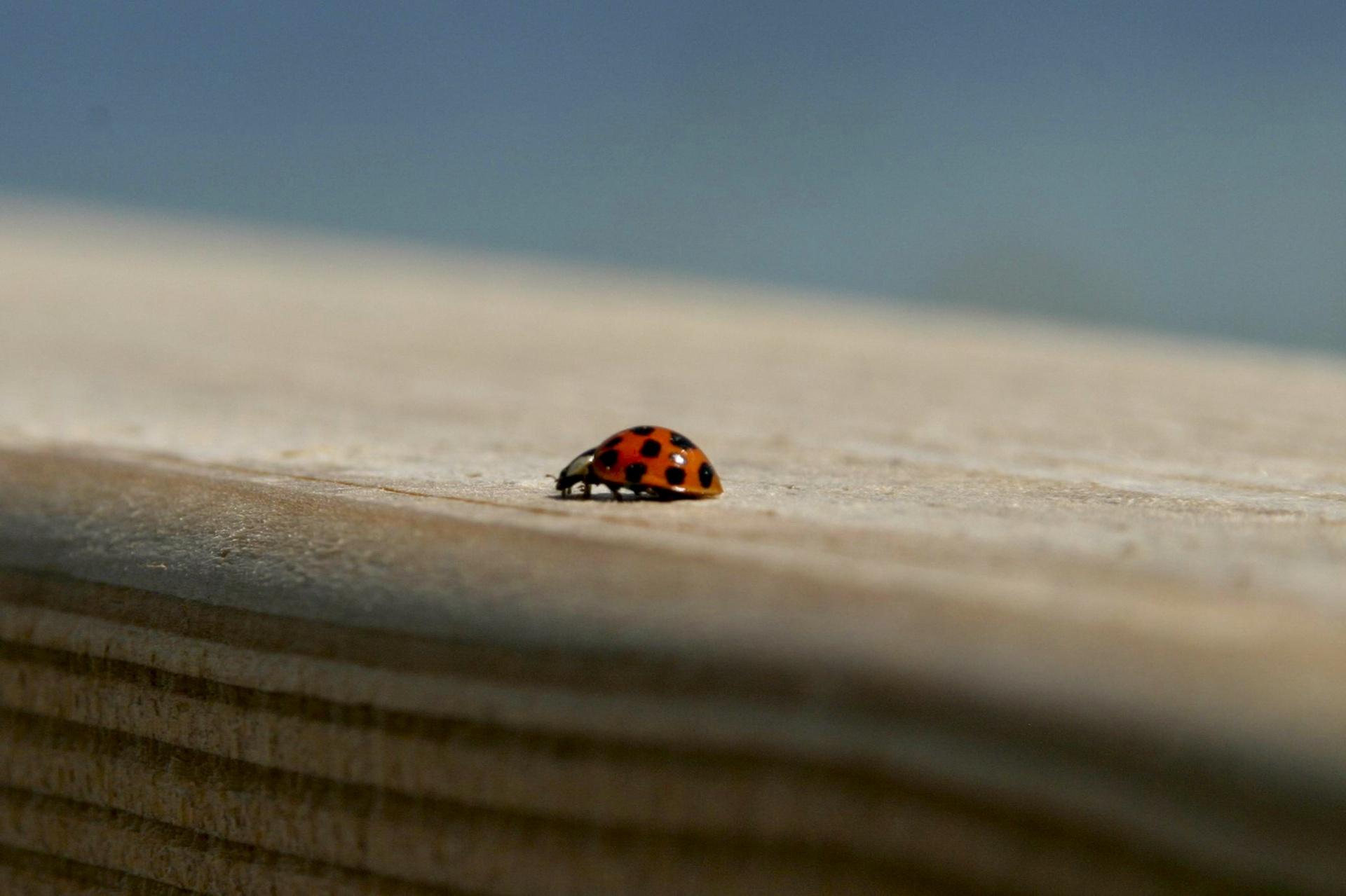 Nahaufnahme eines kleinen Käfers