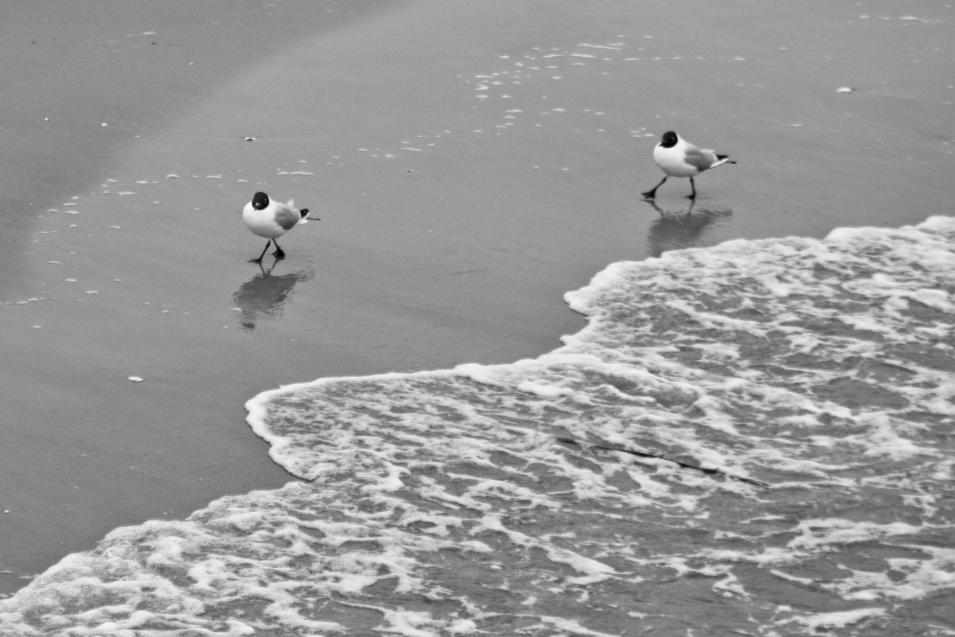 Zwei Möwen am Strand