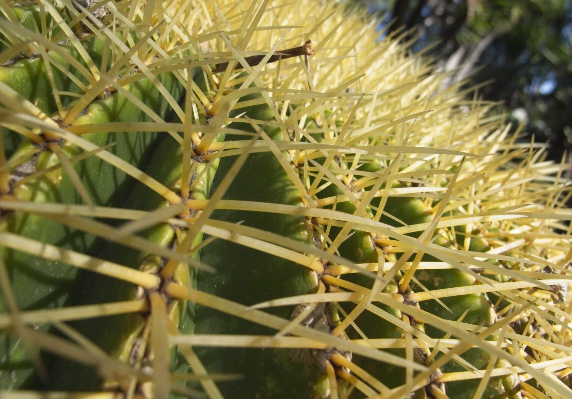 Nahaufnahme eines Kaktus